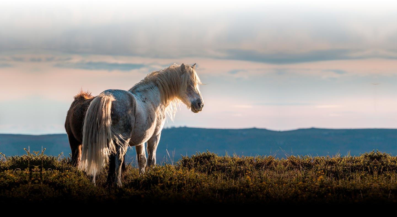 caballos en la sierra de sanabria