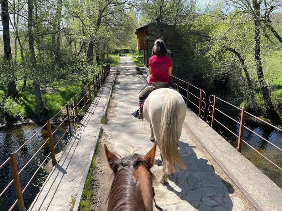 caballos en sanabria